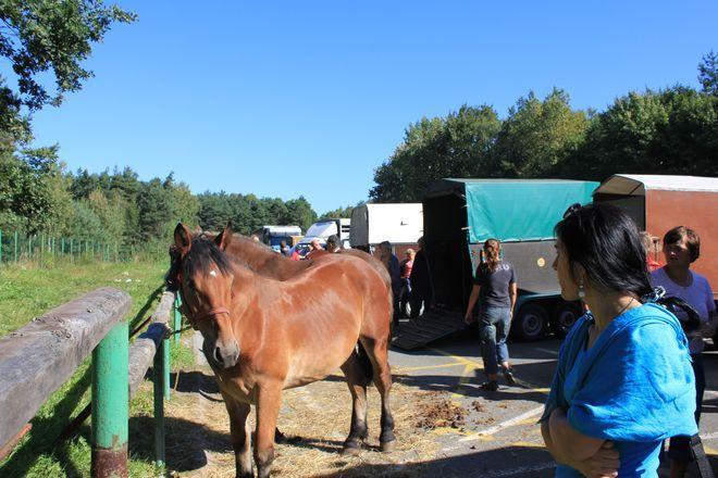 Te barierki wymagają wymiany. Są niebezpieczne dla koni i ludzi - mówi Oliwia Matyja.