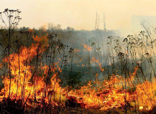 Strażacy gaszą nader częste pożary traw. Przestrzegamy: to może skończyć się tragicznie!, archiwum
